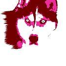 Neon Husky by Rachel Counts