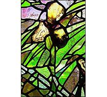Iris in Quartz and Glass Photographic Print