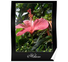 Hibiscus part 2 Poster