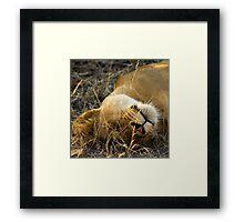 Kruger National Park, South Africa. 2009 VI Framed Print