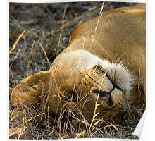 Kruger National Park, South Africa. 2009 VI Poster