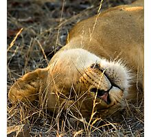 Kruger National Park, South Africa. 2009 VI Photographic Print