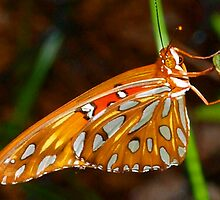 Butterfly beauty by ♥⊱ B. Randi Bailey