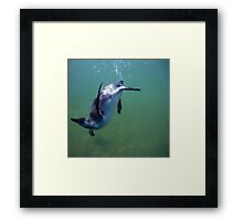 Underwater penguin Framed Print