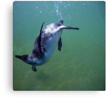 Underwater penguin Canvas Print