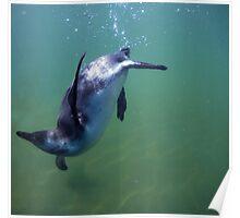 Underwater penguin Poster