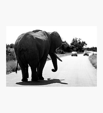 Playing Chicken With An Elephant Photographic Print