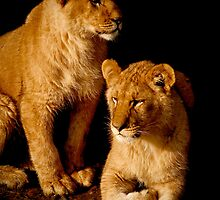 Lion cubs by Yamato-Imaging