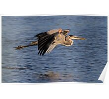 090310 Great Blue Heron Poster