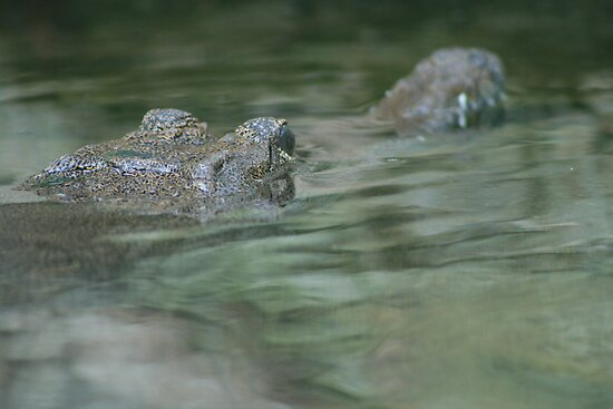Just keeping your head above water by ellismorleyphto