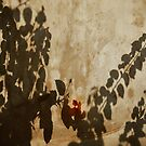 Shadows by Laurent Hunziker