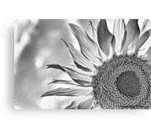 Monochrome Sunflower Canvas Print