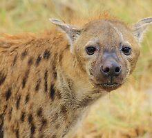 Spotted Hyena - Predator Supreme by LivingWild
