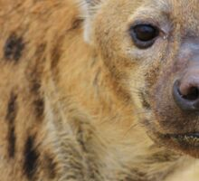 Spotted Hyena - Predator Supreme Sticker
