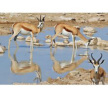 Springbok Antelope - Iconic Wildlife from the Desert Photographic Print
