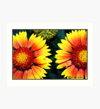 Dos Floras Art Print