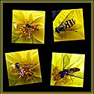 Four Bees on a Yellow Dahlia Collage by BlueMoonRose