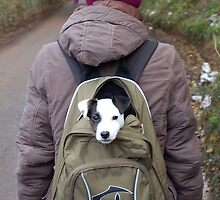 Puppy in a backpack by Mike  Waldron