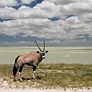 Oryx / Gemsbok,  and Etosha National Park ,Saltpan, Namibia, Africa. by photosecosse /barbara jones