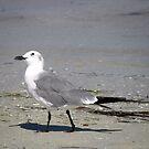 A Walk On The Beach by Junebug60