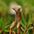 Alien Encounter by Dennis Stewart