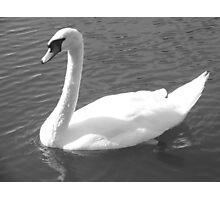 Majestic Swan Photographic Print