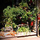 Dog in Storefront with Flower Pots, Le Marais by APhillips
