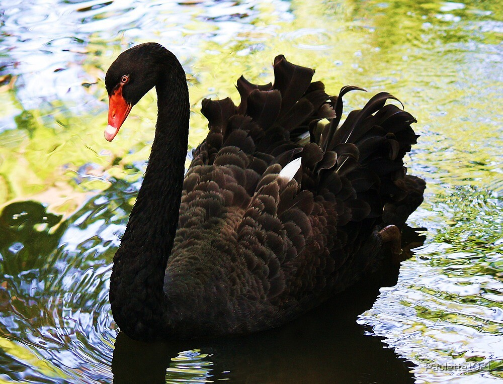 Black Swan by Paulette1021