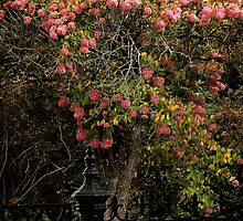 The Manor Gate by RC deWinter