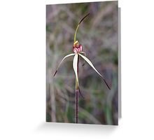 St Andrews Spider Orchid - Arachnorchis sp aff oenochila Greeting Card