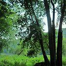 River Trees by teresa731