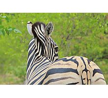 Zebra Colors - Patterns in Nature Photographic Print