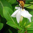 Nectar Hunting by Sunshinesmile83