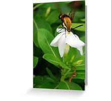 Nectar Hunting Greeting Card