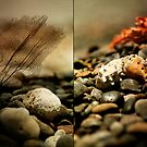 Things found along a rocky shore  by S .