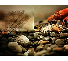 Things found along a rocky shore  Photographic Print