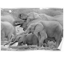 Elephant Family - Tusks and Trunks Poster