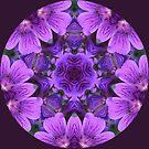 Wild Geranium Kaleidoscope by Jan  Tribe