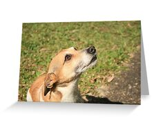 Dog Day in the Sun Greeting Card