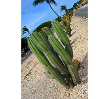 Prickly Aruba Photographic Print