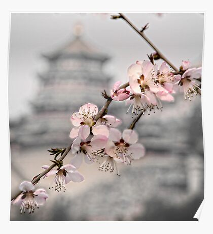 Cherry blossom at Summer Palace Poster