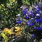 Wonderful colour in the Aussie bush by georgieboy98