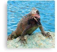 Water creature- Caribbean iguana Canvas Print