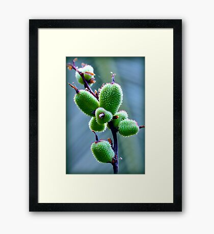 Macro Fruit Framed Print