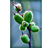 Macro Fruit Photographic Print