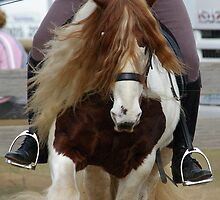 Gypsy Cob by Tania Russell