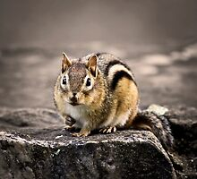 Got Nuts? by Evelina Kremsdorf