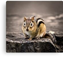 Got Nuts? Canvas Print