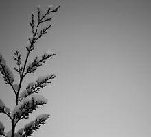 Morning Snow by Paul Finnegan