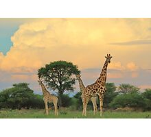 Giraffe - Sunset Storm Watchers Photographic Print